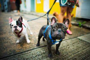 Hundesitting als Nebenverdienst