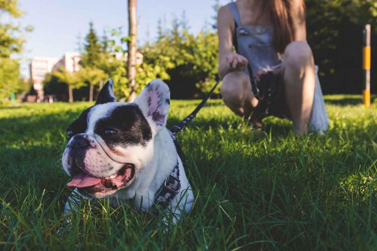 Hundesitting - Hundebetreuung